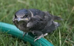 Aaron Umen birds in Oklahoma