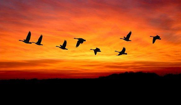 Aaron Umen birds migrating